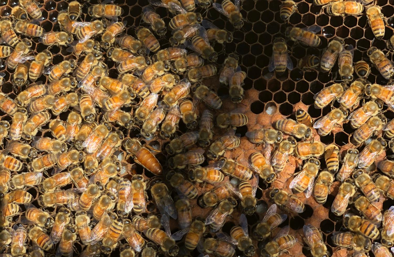 【地域プロジェクト】Beekeeper 和田隆インタビュー