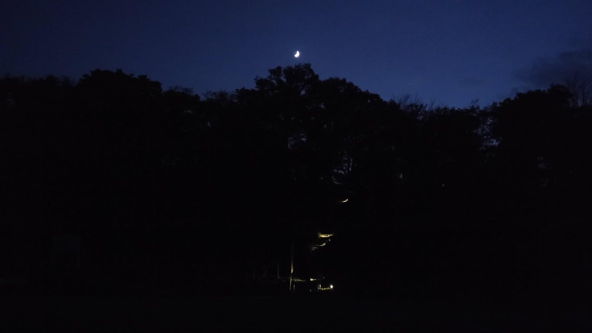 渡部睦子作品「星見るひとたちと出会う旅」特別鑑賞プログラム