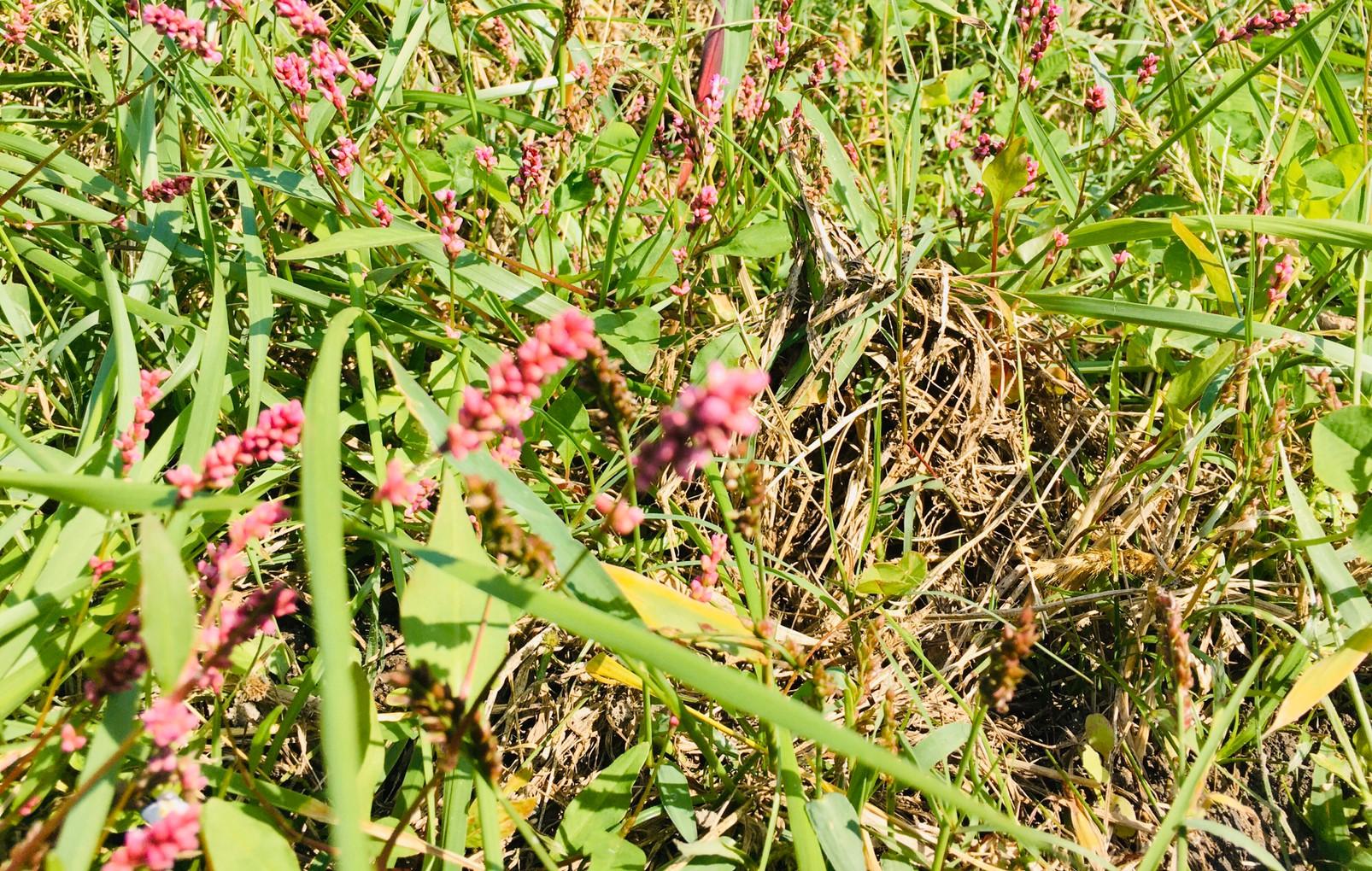 【地域プロジェクト】「野間の紅葉名所を『五感』で味わう小旅行」イベント開催レポート