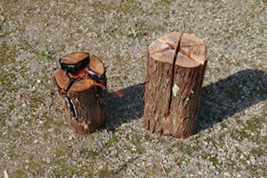 【地域プロジェクト】いながわの森活用プロジェクト開催レポート